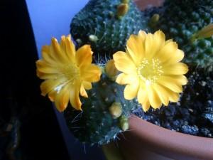 Florile din cabinet 2